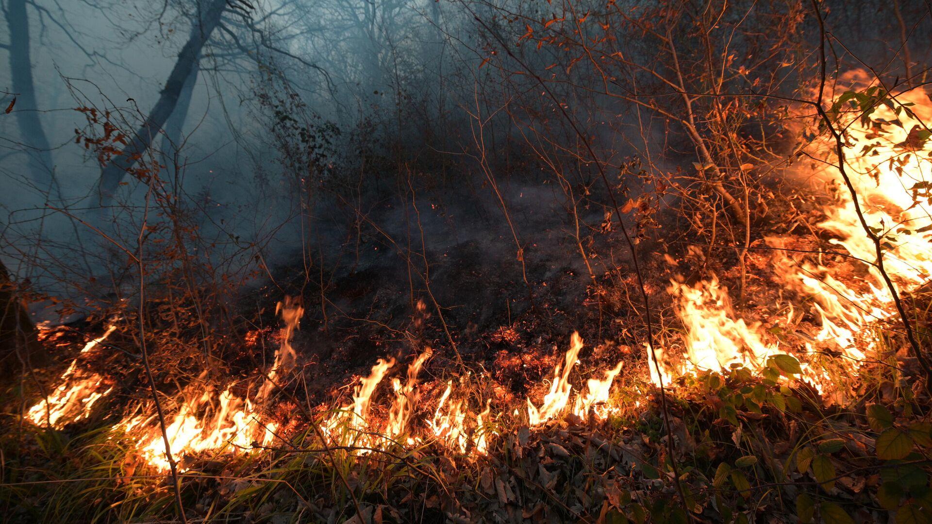 В МЧС оценили ситуацию с природными пожарами в регионах