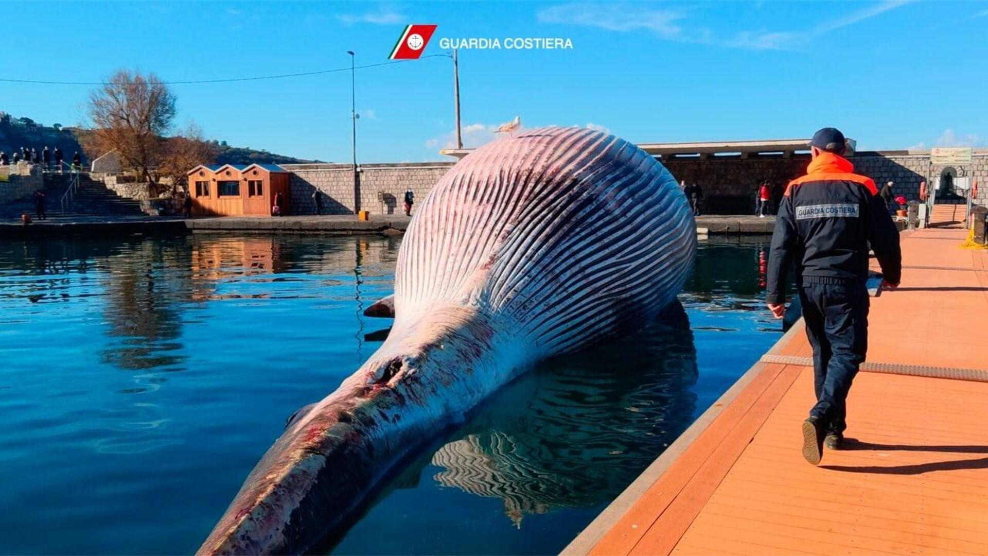 Туша огромного кита у побережья Италии - РИА Новости, 1920, 21.01.2021