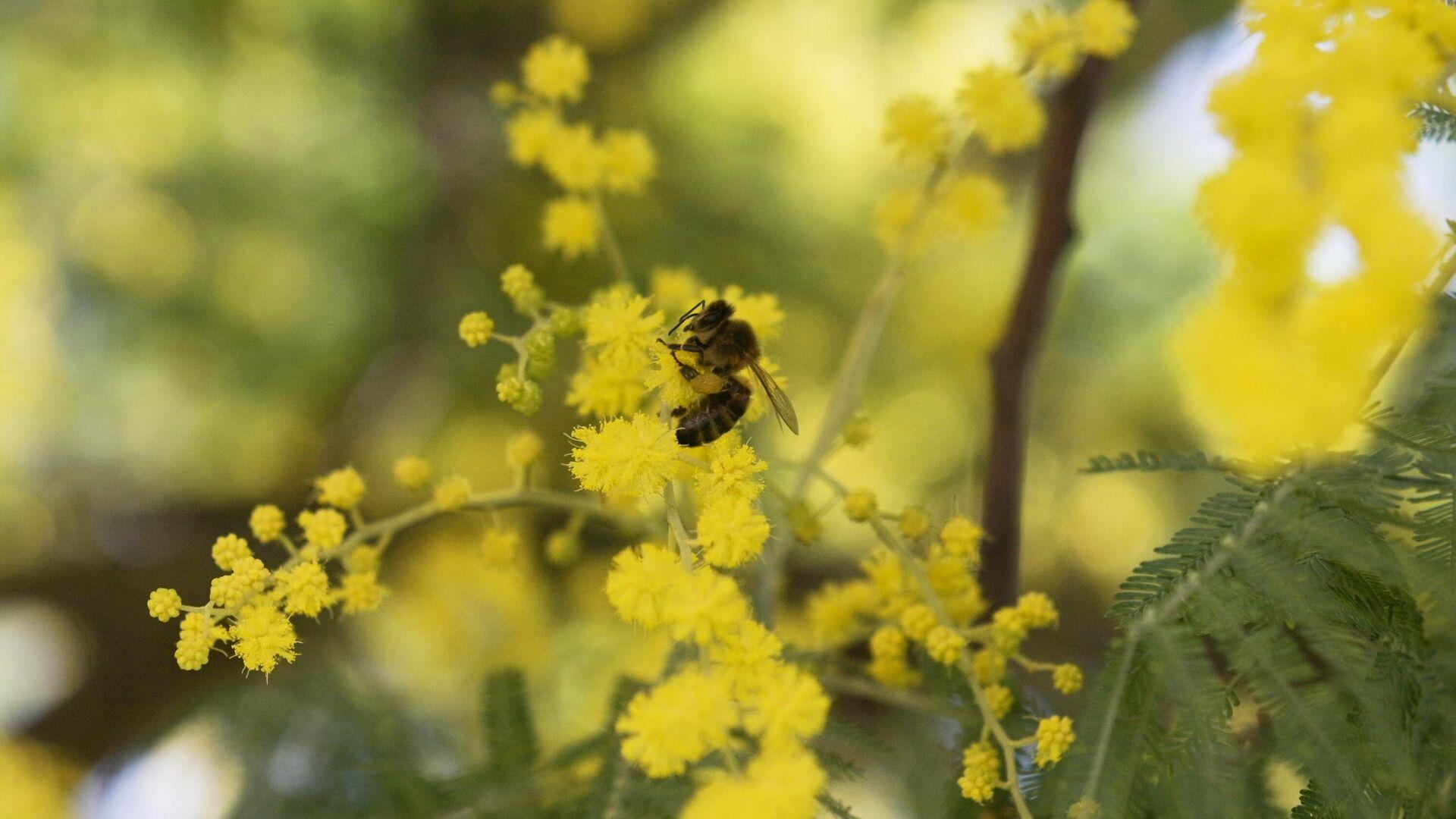 Энтомолог назвал причину сокращения численности пчел