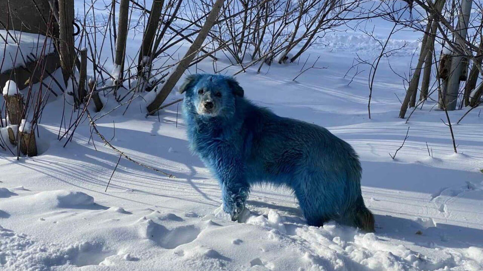 Синие собаки на территории завода Оргстекло в городе Дзержинске Нижегородской области - РИА Новости, 1920, 11.02.2021