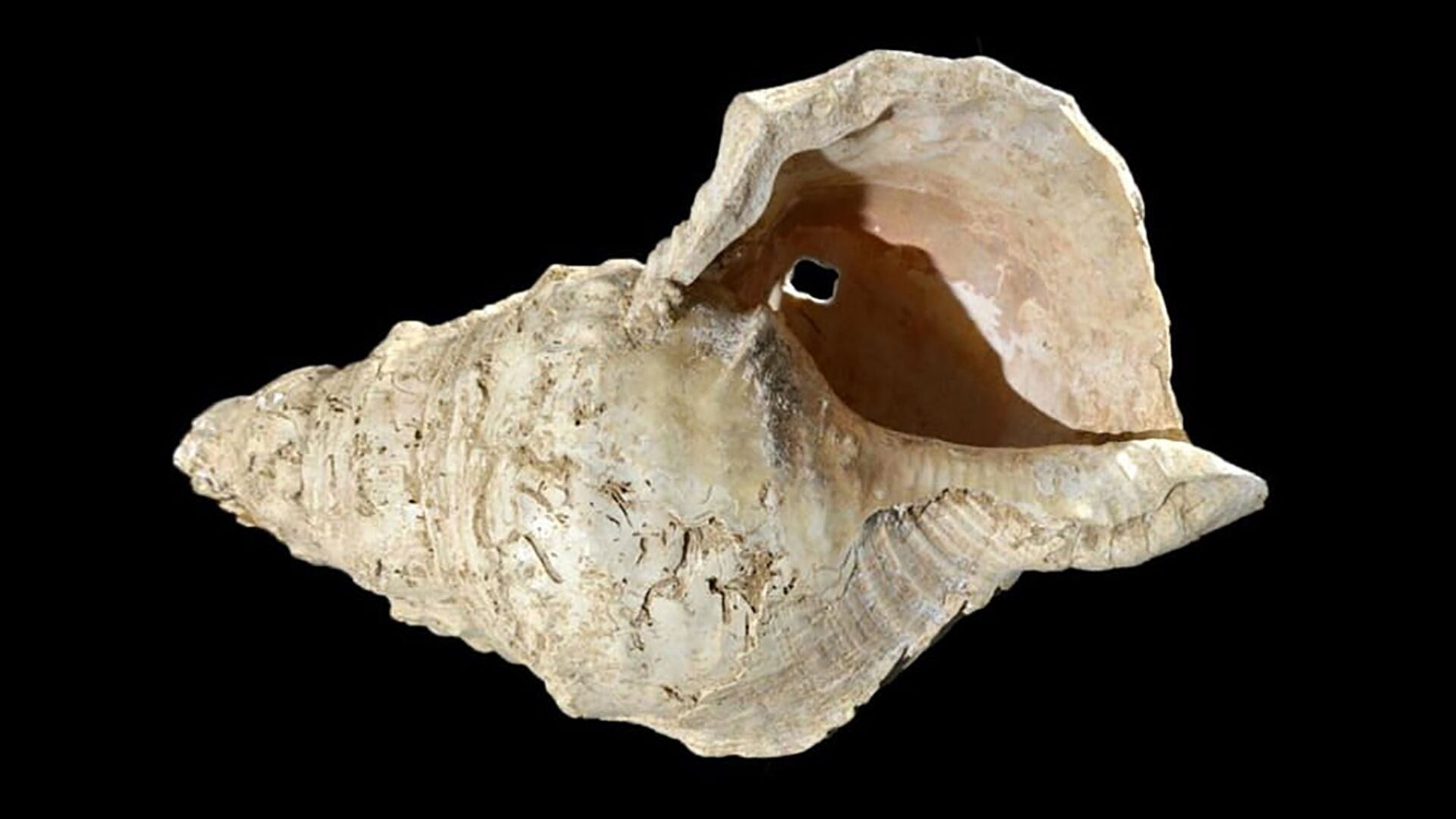 Раковина, найденная в пещере Марсулас, Франция - РИА Новости, 1920, 12.02.2021