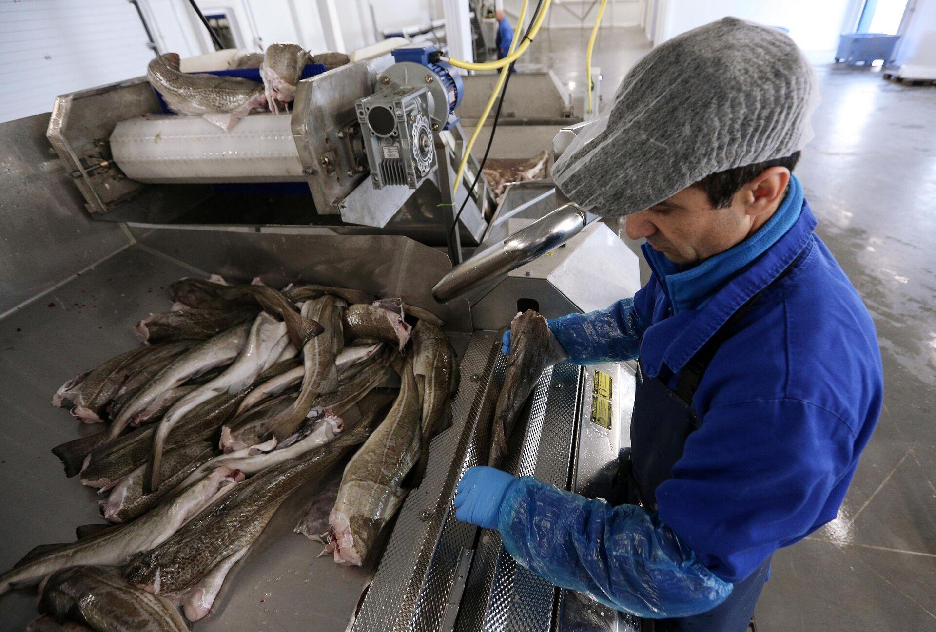 Треска — польза и вред для здоровья, состав и калорийность рыбы