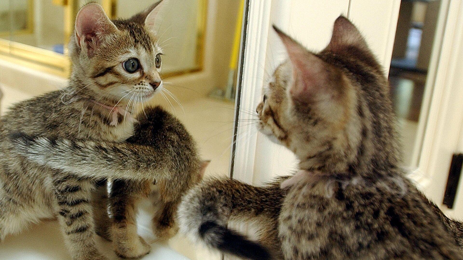 Клонированные котята в Сан-Франциско - РИА Новости, 1920, 29.04.2021
