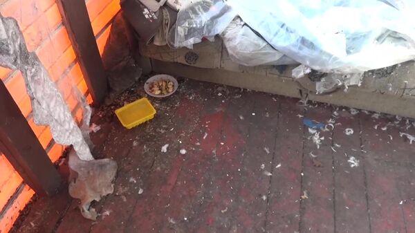 Обстановка частного дома в Талдоме, где нашли истощенную девочку без одежды. Скриншот видео