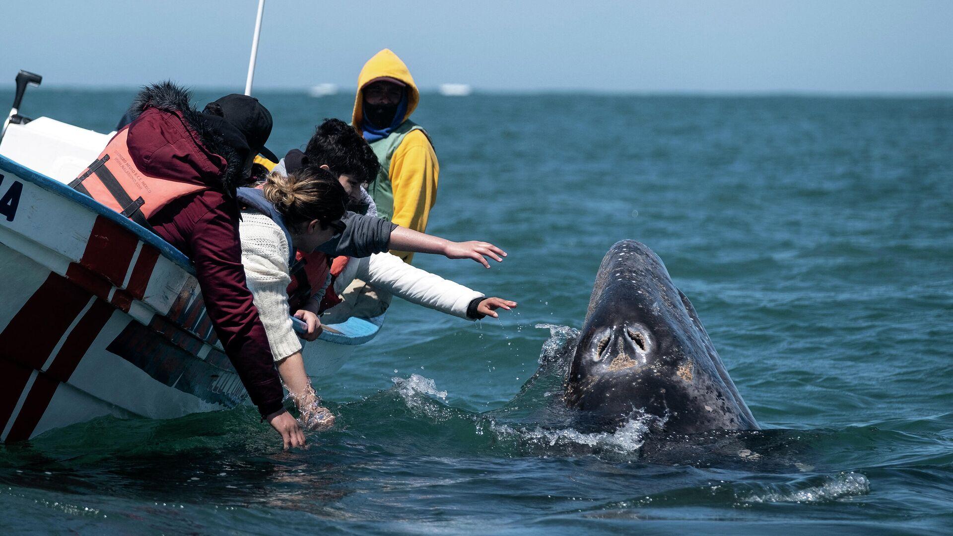 На берег Охотского моря выбросился гигантский косяк сельди
