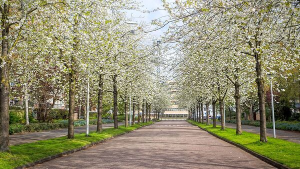 Весна в Амстердаме
