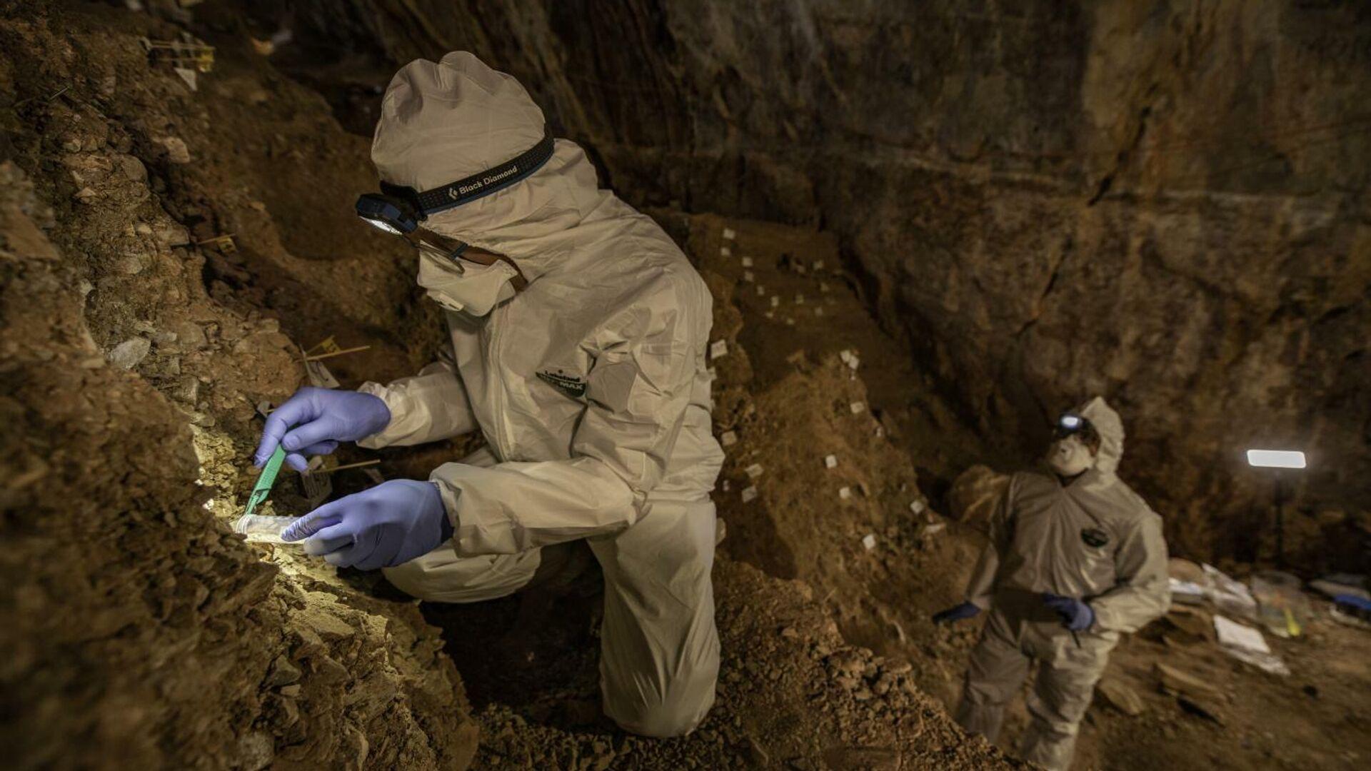 Впервые воссоздан из почвы геном ископаемого медведя