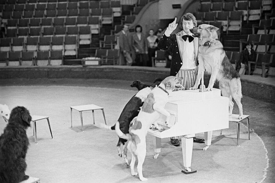Аттракцион Поющие собаки. Московский государственный цирк на проспекте Вернадского. 1 июня 1978 года