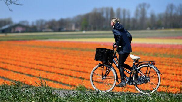 Девушка проезжает мимо цветочных полей в Лиссе, Нидерландах