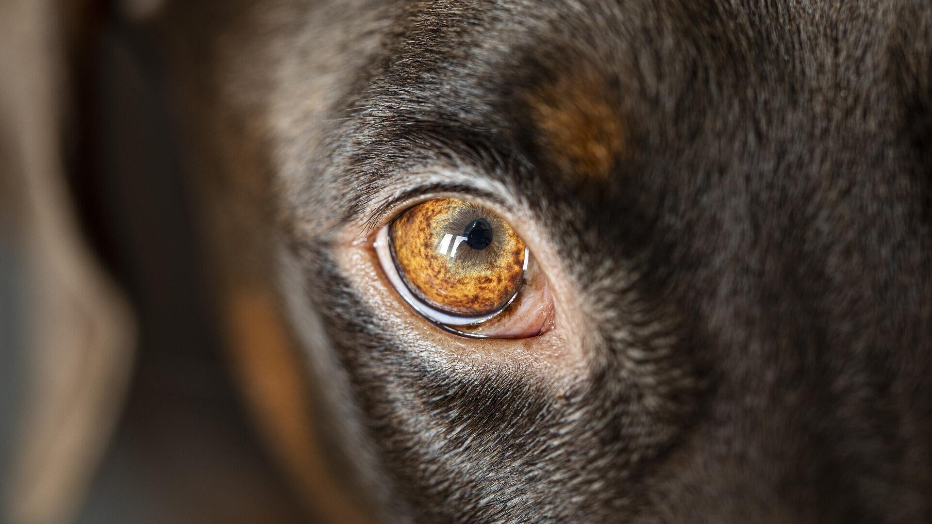 Ученые нашли неизвестный коронавирус, который распространяют собаки