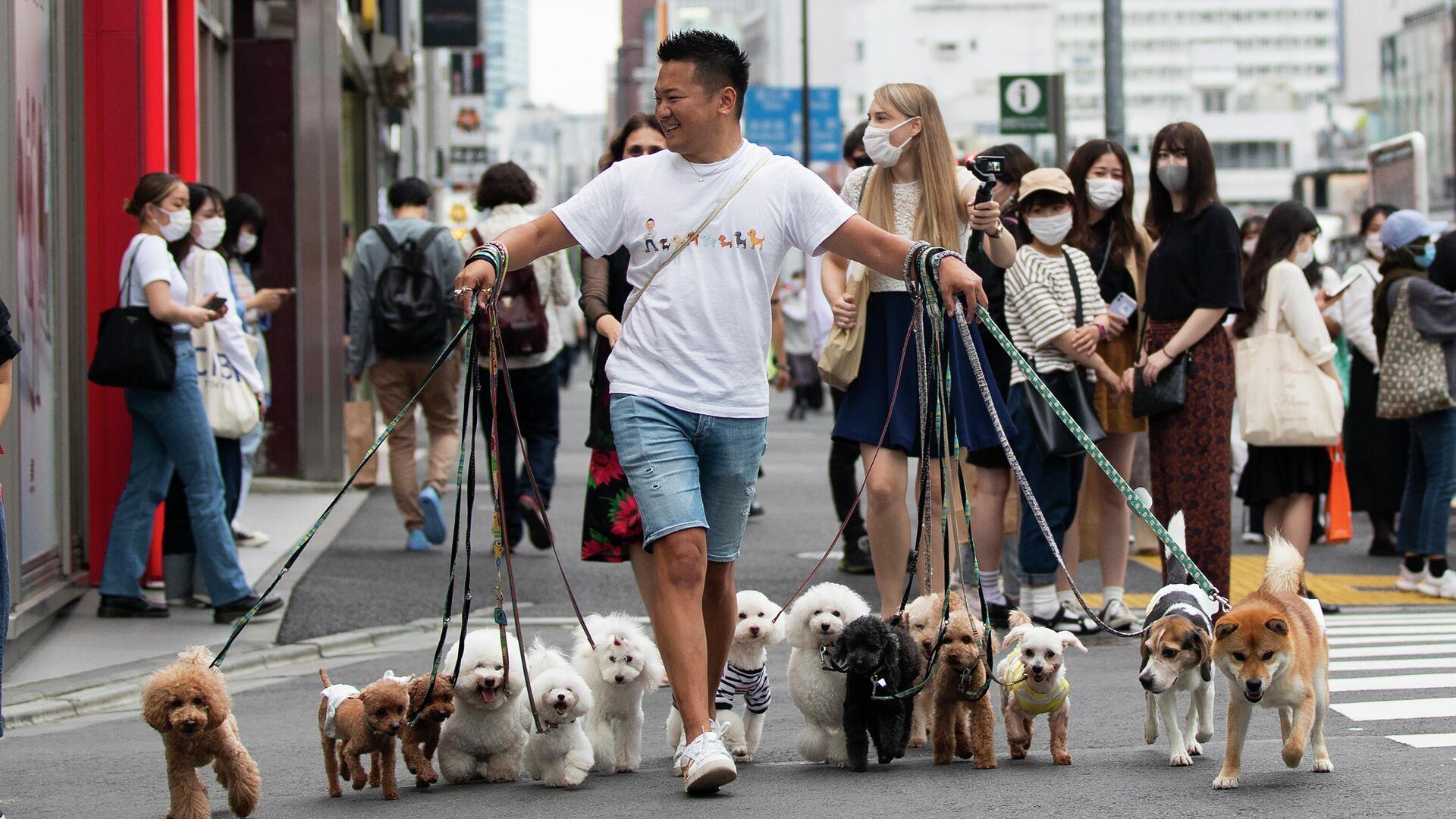 Специалист по выгулу собак переводит их через дорогу в Токио - РИА Новости, 1920, 25.06.2021
