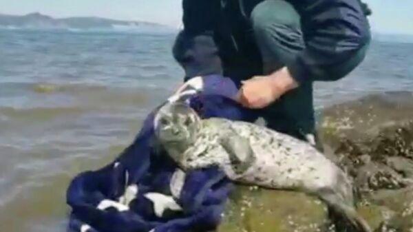 Сотрудник МЧС России Виталий Прокопьев выпускает в Охотское море спасенного детеныша нерпы. Кадр из видео