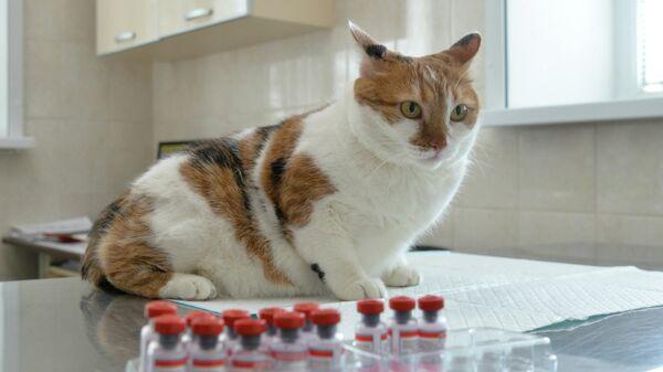Кошки могут заболеть COVID-19 при контакте с постелью зараженного хозяина