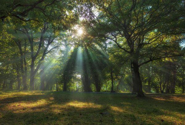 Лучи в утреннем парке