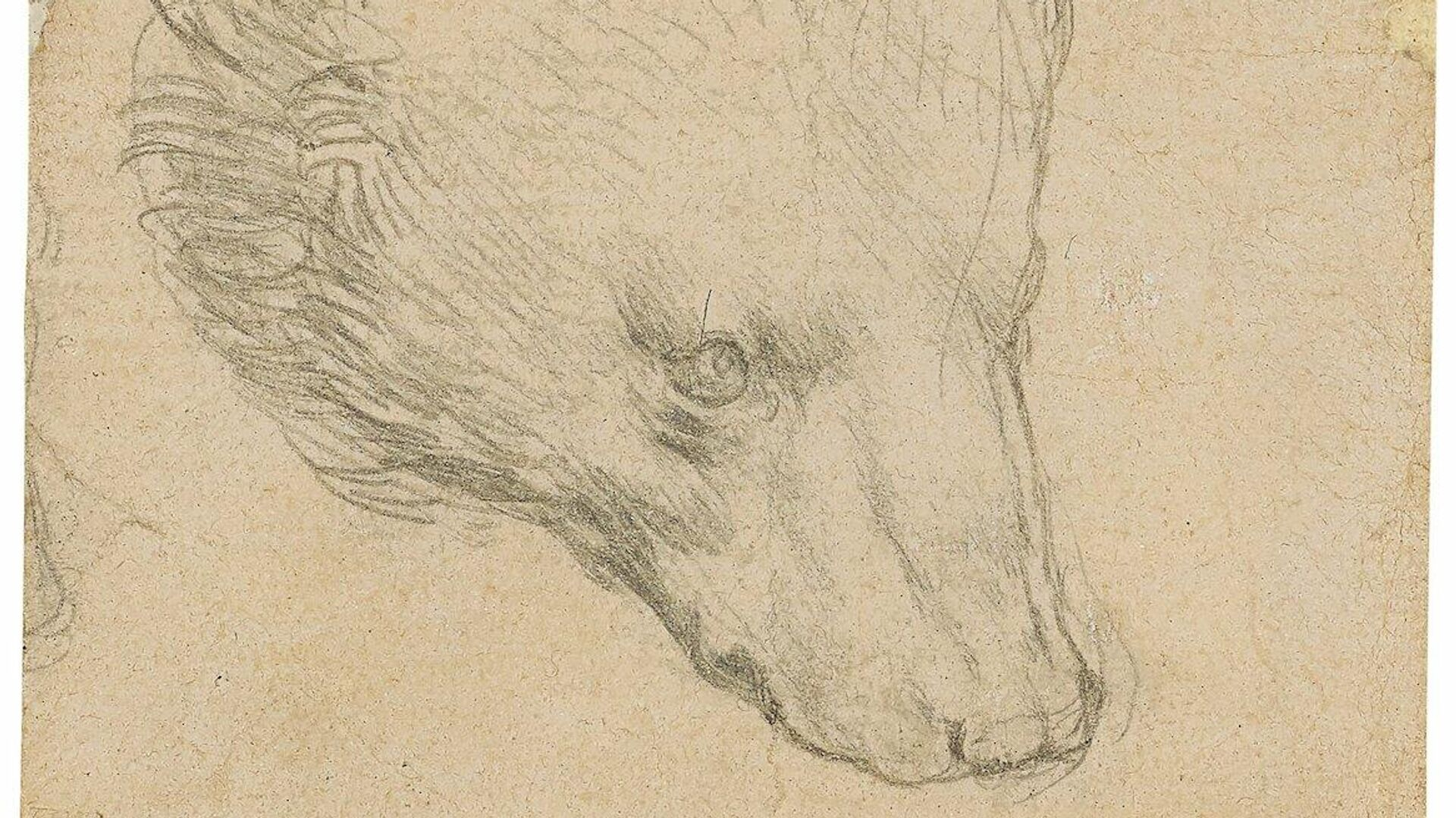 Набросок головы медведя, выполненный итальянским художником Леонардо да Винчи - РИА Новости, 1920, 09.07.2021