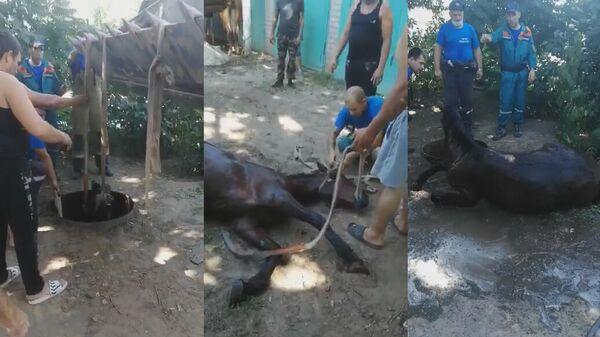Волгоградские пожарные спасли жеребенка, провалившегося в колодец