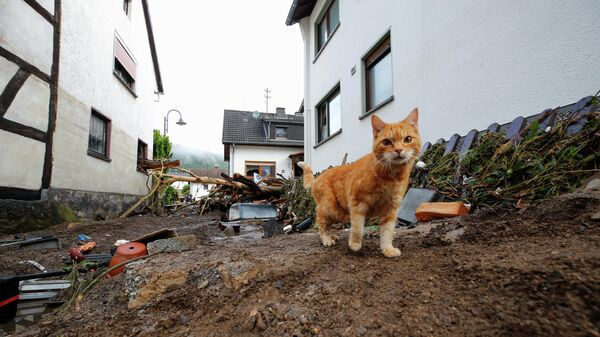 Кошка на улице после наводнения в Шульде, Германия
