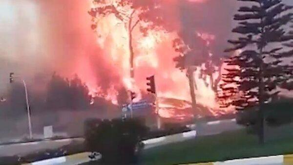 Затянуло дымом: сильный лесной пожар в районе Антальи