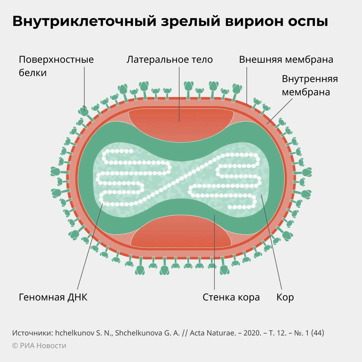 Внутриклеточный зрелый вирус оспы