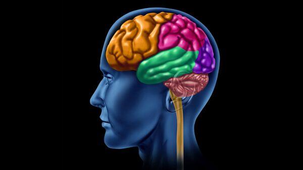 Ученые узнали о способности мозга предсказывать будущее