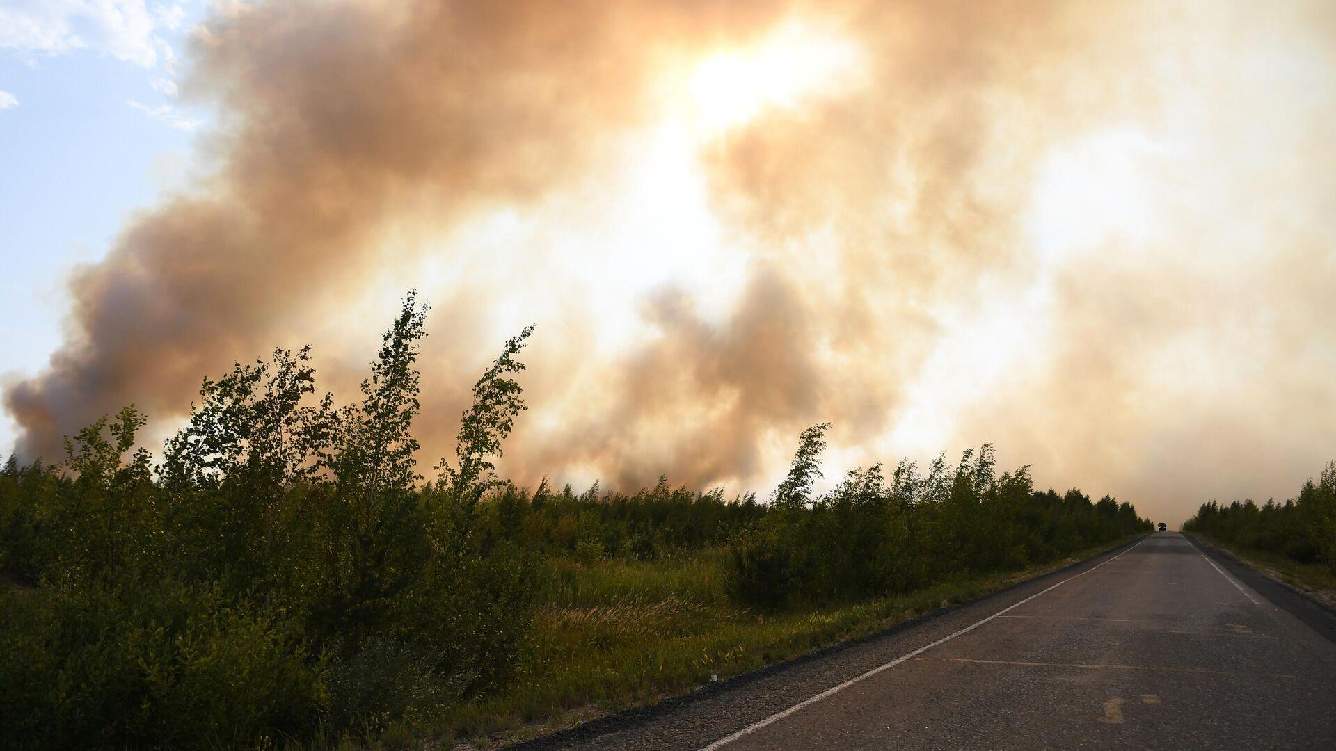 Лесные пожары - РИА Новости, 1920, 10.09.2021