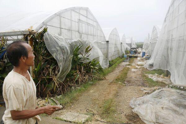 Житель у теплиц с манго, разрушенных сильным ветром тайфуна Ногури, Окинава, Япония