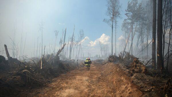 Лесные пожары в Тверской области
