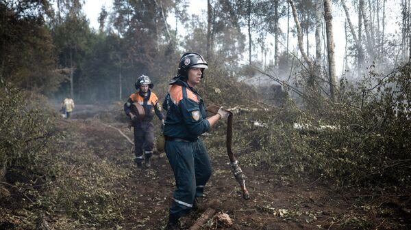 Сотрудники пожарной охраны на месте лесных пожаров