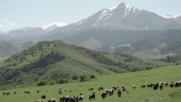 Пастбища в горах Тянь-Шаня (Киргизия). Архивное фото