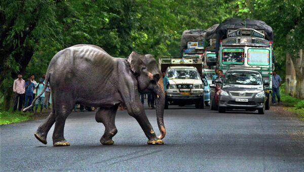 Дикий слон пересекает шоссе в Индии. Архивное фото.