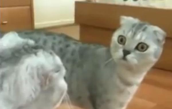 Кошмар в зеркале, или что увидел кот