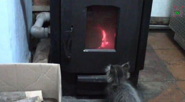 Видео в YouTube: котенок и огонь