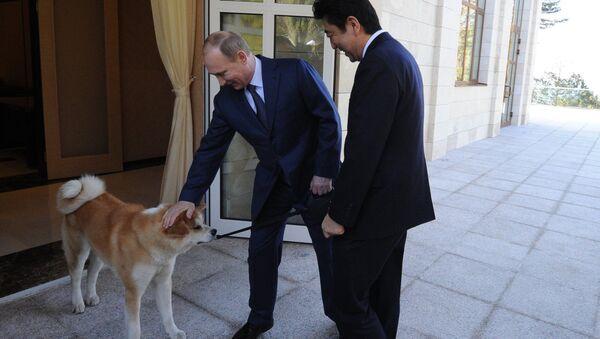 Владимир Путин и Синдзо Абэ во время встречи в резиденции Бочаров ручей. Собака по кличке Юмэ - породы акито-ину