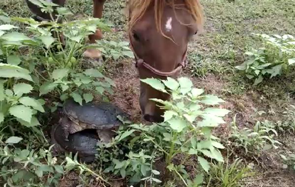 Только не черепаха, или Как смертельно напугать лошадь