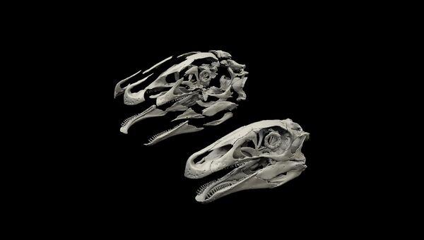 Изображение: Компьютерная модель черепа теризинозаврида в собранном и разобранном виде.