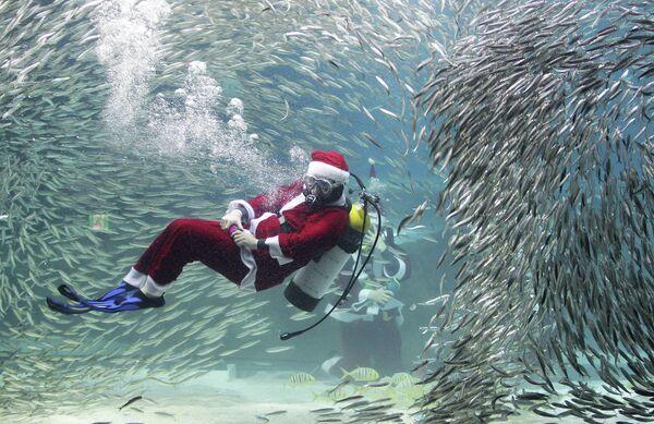 Дайвер в костюме Санта-Клауса плавает в аквариуме с сардинами в Сеуле, Южная Корея