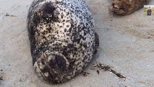 Чил-аут пляже в Сан-Диего, или Как отдыхают морские котики в США