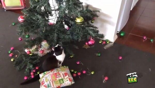 Коты против Нового года