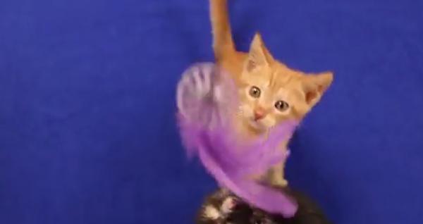 Возмущенные котята