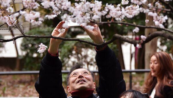 Мужчина фотографирует цветущую сакуру в парке Токио, Япония. 23 марта 2014