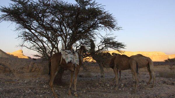 Паломничество в пустыню Арава в Израиле в преддверии Песаха