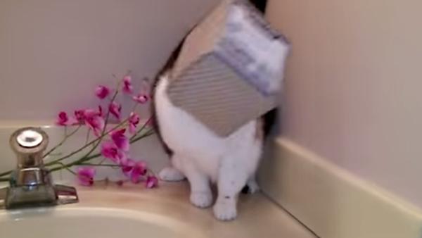 Ах, эти нелепые кошки, или К такому жизнь их явно не готовила