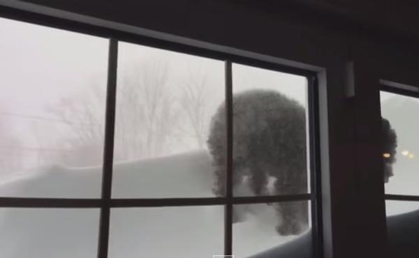 Щенок-снегоход, или К такому его жизнь не готовила