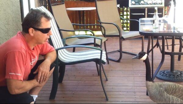 Беседа с канадским гусем