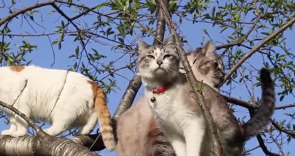 Коты-древолазы