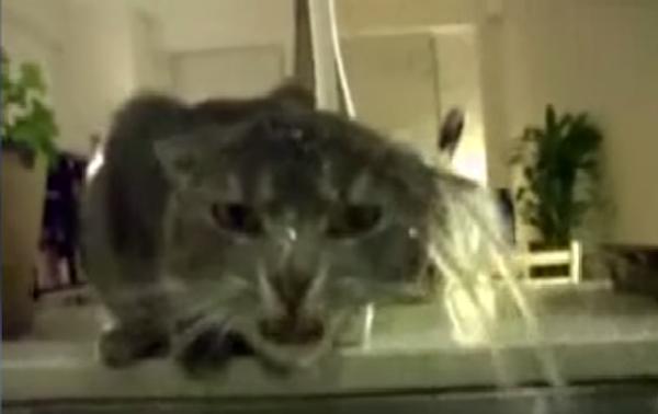 Коты против воды, или Вода против котов?