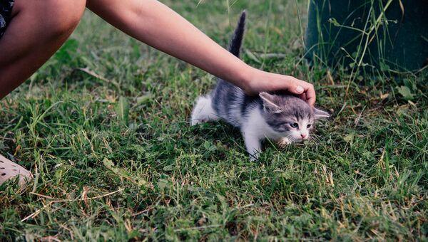 Ребёнок гладит котенка. Архивное фото