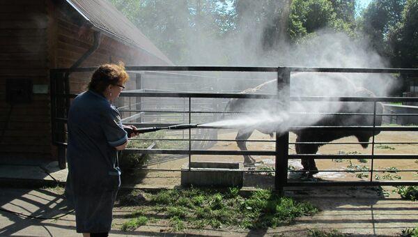 Борьба с жарой в Калининградском зоопарке