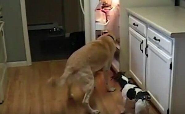 Хитрые собаки