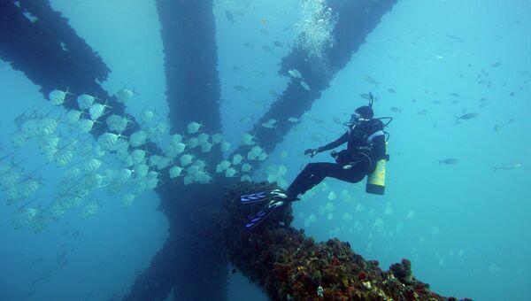 Водолазы снимают рыбу на видео при помощи 3D-камеры